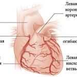 Венечные артерии сердца