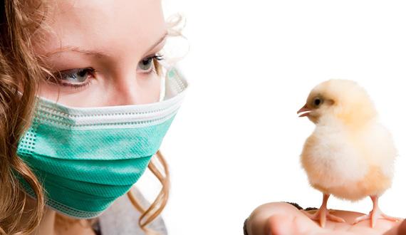 Вирусы птичьего и свиного гриппа