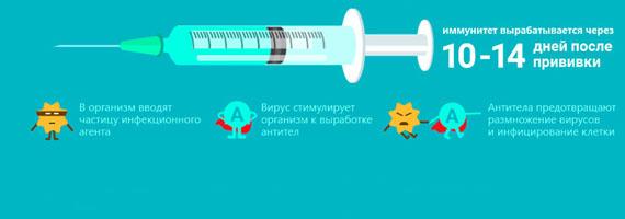 Сколько длится прививка от гриппа